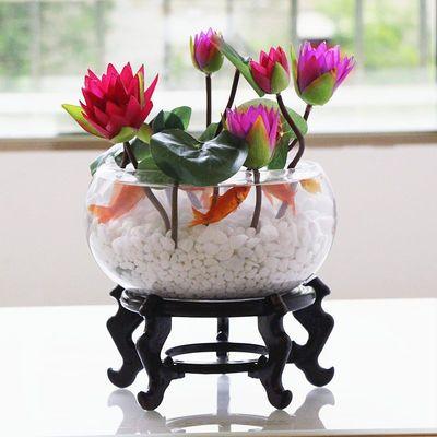 睡莲碗莲荷花卉种子四季种蔬菜种子盆栽植物室内花卉绿植水培好养