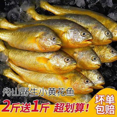 野生小黄鱼新鲜冷冻小黄花鱼冰鲜黄鱼海鲜生鲜鲜活海鱼水产包邮