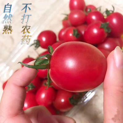 新鲜圣女果包邮千禧樱桃小番茄西红柿新鲜水果蔬菜酸甜小柿子批发