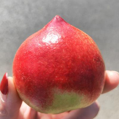 新鲜现摘3斤5斤沂蒙山红油桃  山东油桃黄心油桃 桃子水果
