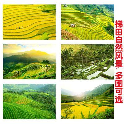 绿色梯田海报田园风光装饰壁画墙贴画自粘餐厅卧室自然山水风景画