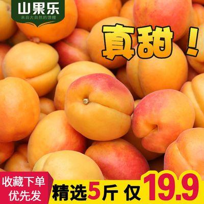 现摘杏子5斤 新鲜金太阳大黄杏时令酸甜时令应季水果批发李子贵妃