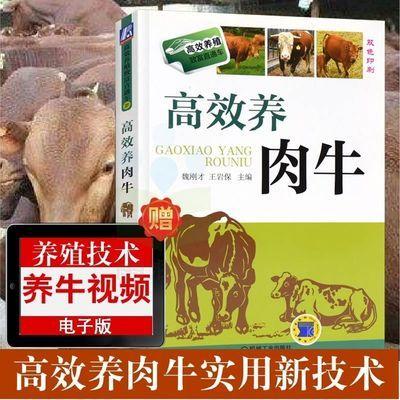 高效养肉牛 肉牛养殖技术教程书籍 兽医书 牛病大全养牛书籍