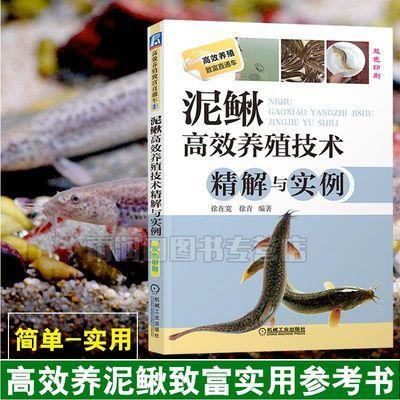 泥鳅高效养殖技术精解与实例 双色印刷书籍 养泥鳅技术书籍