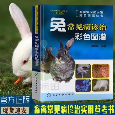 兔常见病诊治彩色图谱 养兔技术兔子养殖技术书 高效养兔技术书籍