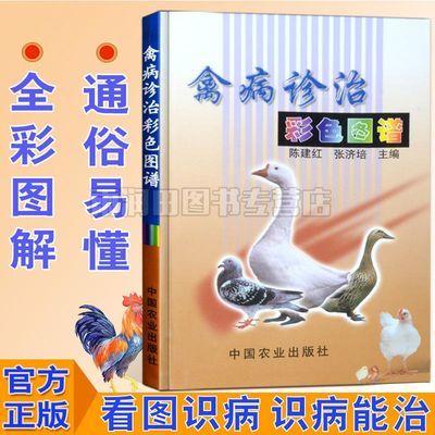 禽病诊治彩色图谱鸡鸭鹅养殖疾病诊断治疗书籍高效养殖技术书籍