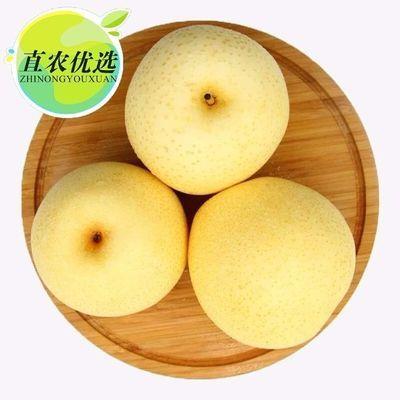 收藏优先发货 河北皇冠梨一级大果5/10斤装黄冠梨子单果220-300g