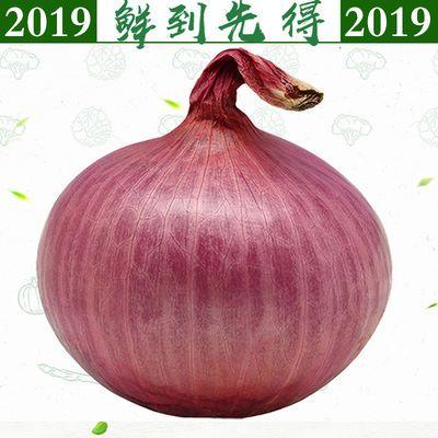 【2020鲜货】紫红皮洋葱5斤10斤包邮新鲜蔬菜紫红皮洋葱圆葱头