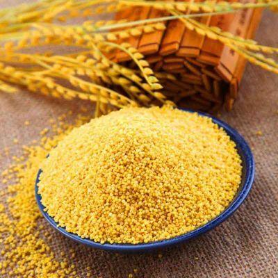 19年新米东北农家黄小米五谷杂粮朝阳小黄米孕妇小米粥食用月子米