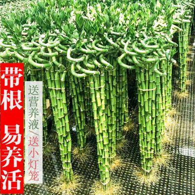 https://t00img.yangkeduo.com/goods/images/2019-04-22/1480342c83777ef941b876d740164824.jpeg