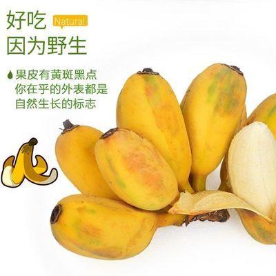 广西苹果粉蕉 苹果蕉 现摘新鲜青蕉发货3斤5斤9斤装坏包赔包邮