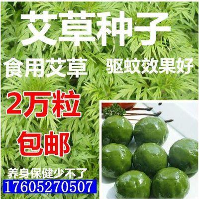 香四季新款蔬菜种子可种食蒿种子野生艾草药用艾草种籽蕲艾艾绒种