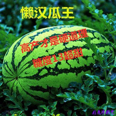 品名:懒汉瓜王 西瓜种子均为原装拆包,包发芽。 本品种是在西农八号的基础上选育而成,属大果型,绿皮覆墨绿条带,红瓤,肉质细脆口感好,中心糖量13%,单瓜重10千克左右,大瓜可达20千克以上,一般亩产量5000千克。 种植方法:西瓜种子浸泡在温水中4个小时,然后拿出用纱布包裹,(保持纱布潮湿度哦)。再将其放到25℃以上的恒温中,4/5天种子就会发出小芽了。最后芽朝下播种就好啦!