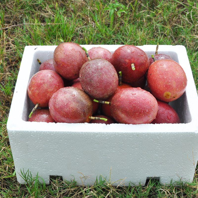 【只发精品果】广西百香果精选大果5斤新鲜水果12个1/3斤酸甜多汁_3