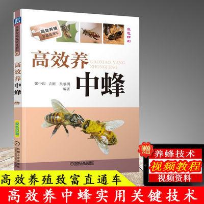 高效养中蜂 蜜蜂养殖技术书籍 养蜂书籍全套实用手册