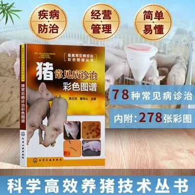 猪常见病诊治彩色图谱 猪病防治技术教程书 猪病治疗书猪养殖书籍