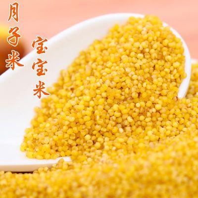 20年东北天然小黄米自产粮食月子米农家小米杂粮谷子宝宝米小米粥