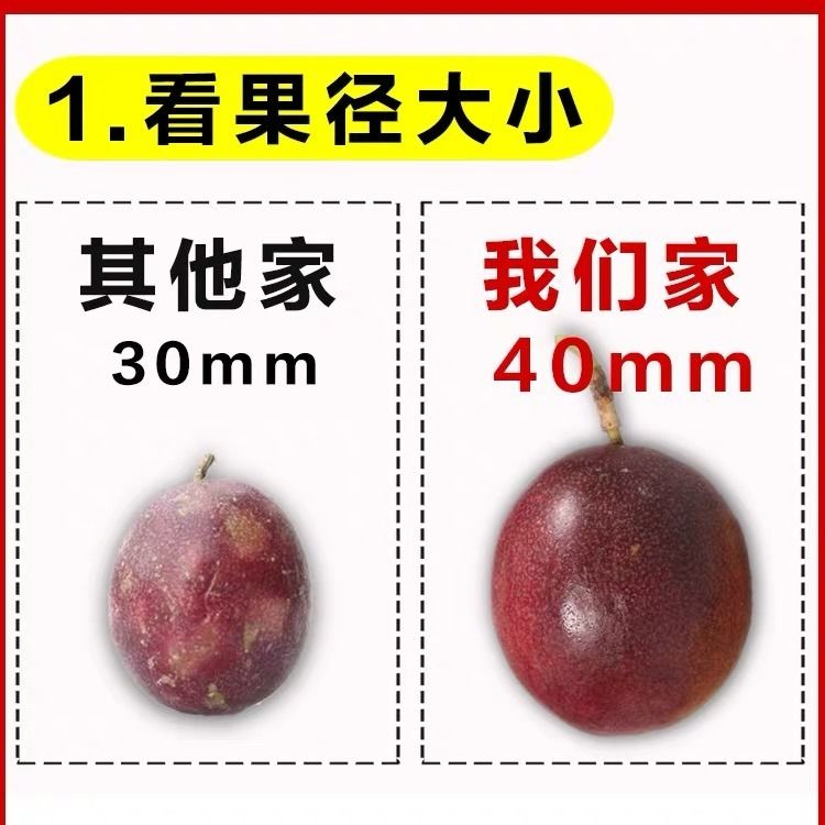 广西百香果5斤送开果器热带新鲜水果鸡蛋果现摘精装大红果1斤大果_3