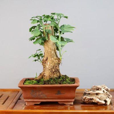 �@林植物造型技�
