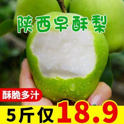 【特惠10斤装】陕西早酥梨青皮脆爽酸甜多汁香酥梨嫁接库尔勒香梨