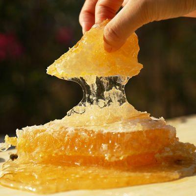 山花蜜蜂蜜【买1送1】百花蜂蜜洋槐蜂蜜正品蜂蜜天然土蜂蜜500g瓶