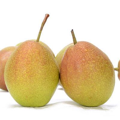 【现摘现发】新疆库尔勒香梨嫁接红香酥梨新鲜水果脆甜多汁10/3斤