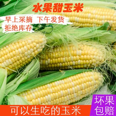 新鲜玉米棒云南双色水果玉米新鲜蔬菜当季农家带皮现摘现发甜玉米