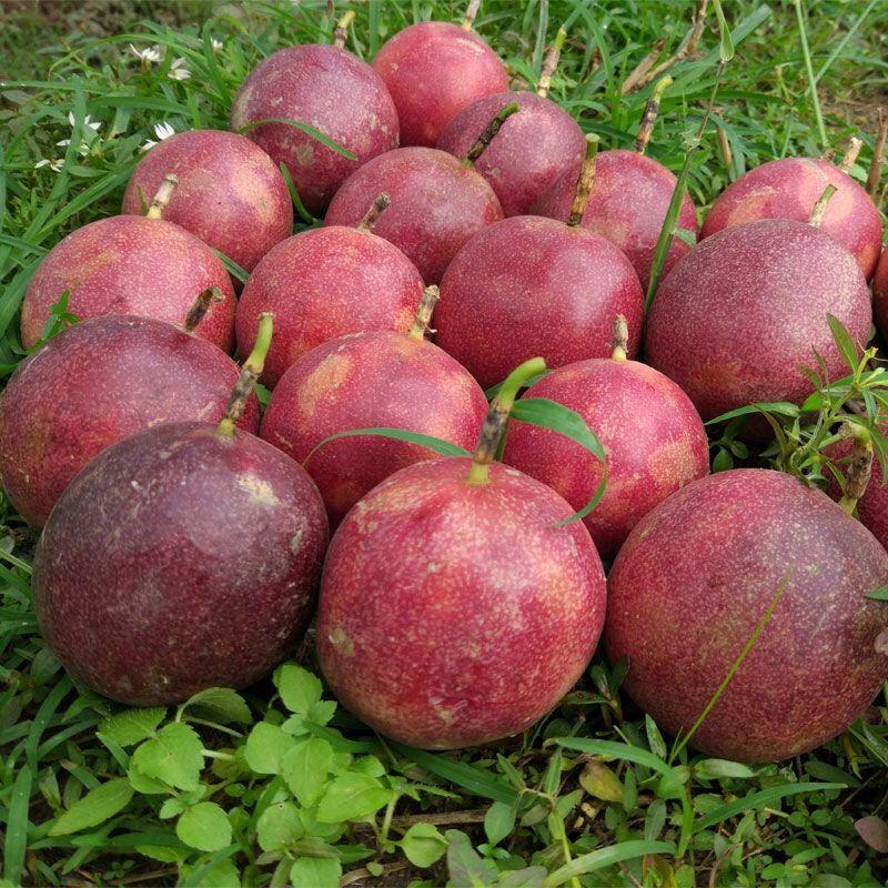 广西百香果新鲜水果西番莲水果5斤3斤2斤装百香果批发 酸甜多汁_2