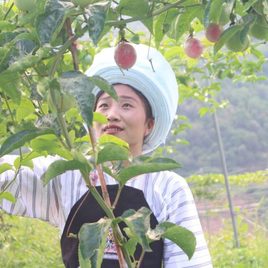 贵州贞丰百香果 现摘新鲜百香果 5斤礼盒装 20个大果 10个大果装_3