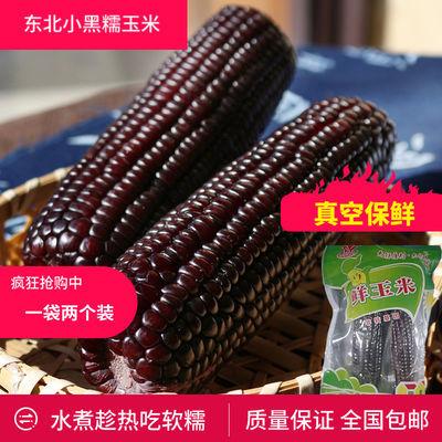 玉米 东北鲜玉米 真空保鲜 黑玉米棒 紫黑玉米非转基因包邮