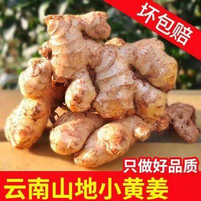 【今天现挖】山东特产新鲜嫩生姜老姜嫩姜仔姜子姜批发3/5斤包邮