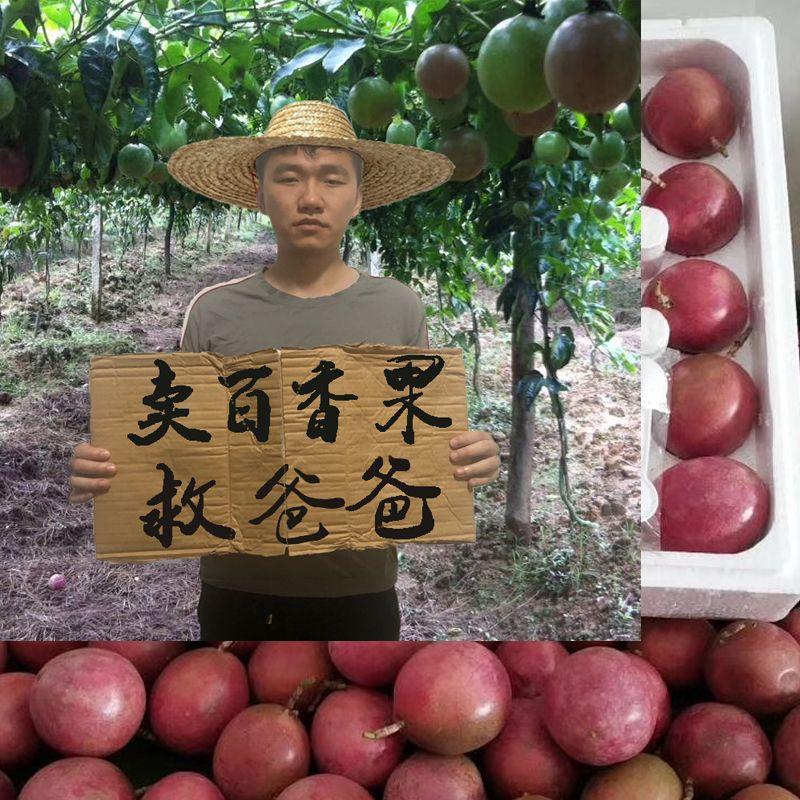 广西百香果5斤送开果器热带新鲜水果鸡蛋果现摘精装大红果1斤大果_0