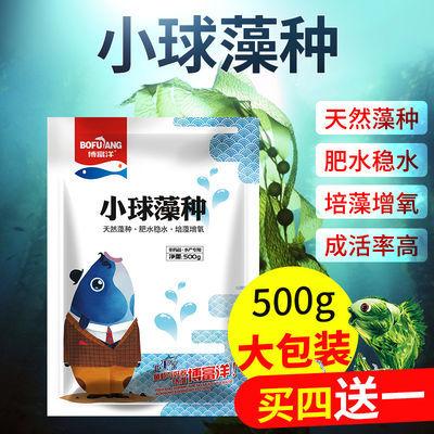 小球藻种鱼虾蟹龟水产养殖小龙虾开口料浓缩复合藻种肥水培藻增氧
