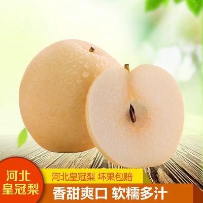 河北皇冠梨新鲜水果当季香酥雪翠梨子脆甜多汁产地直供5斤包邮