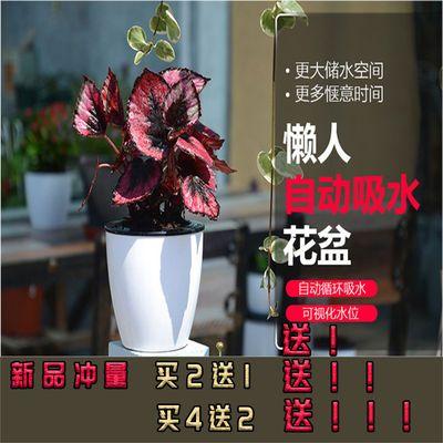 懒人花盆自动吸水特价清仓塑料多肉绿萝专用栀子仿陶瓷专用养花栽