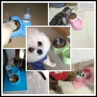 宠物自动喂食器猫碗猫食盆猫咪用品狗狗自动饮水双碗狗盆狗碗猫盆