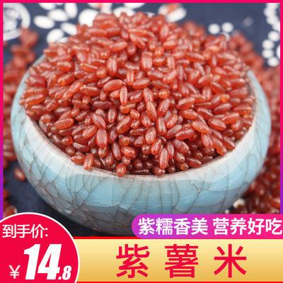 东北紫薯米大米5斤/250g长粒香米紫糯米紫薯米五谷杂粮粗粮八宝粥