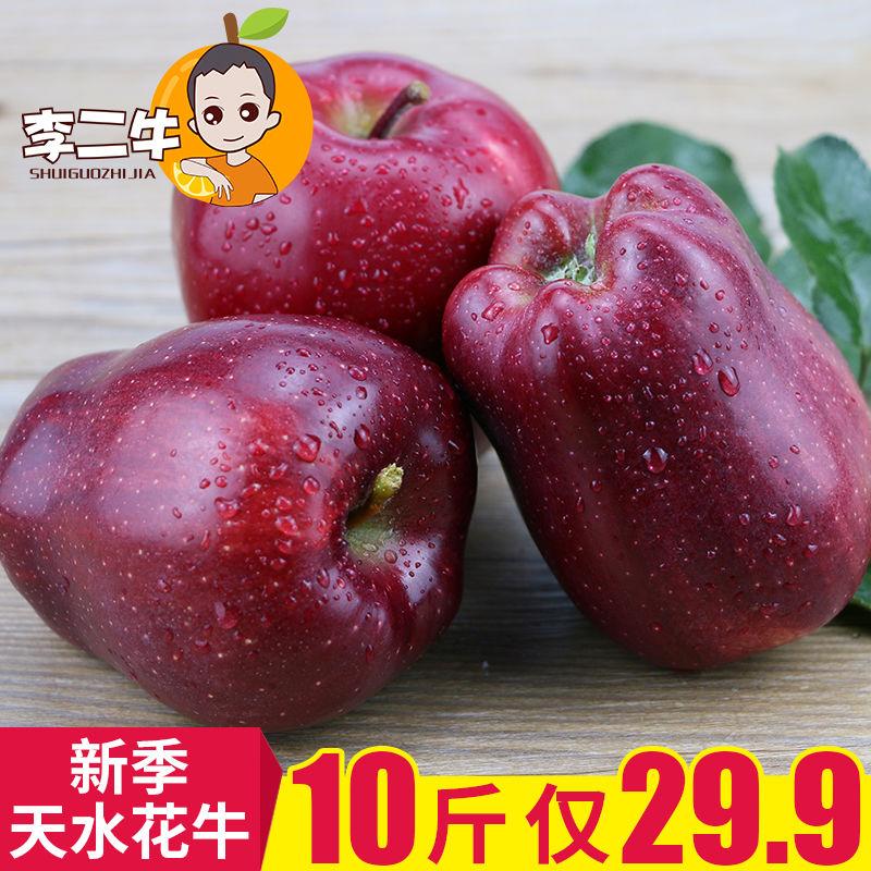现货花牛苹果10斤 新鲜应季甘肃蛇果粉面甜宝宝辅食刮泥水果5/3斤