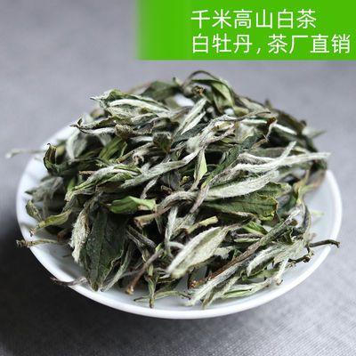 白茶白牡丹 绿行茶叶 福建政和福鼎千米高山头春白茶
