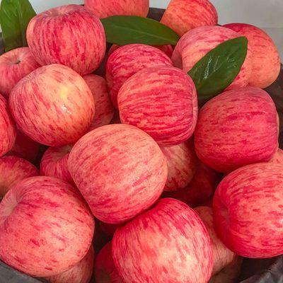 【限时特价】山东栖霞红富士苹果 新鲜当季水果现摘现发3/5/10斤