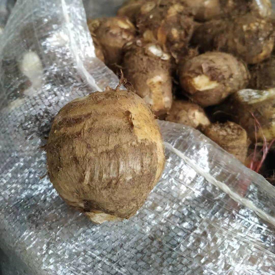 云南新鲜芋头10斤毛芋头农家小芋头芋艿5斤10斤3斤