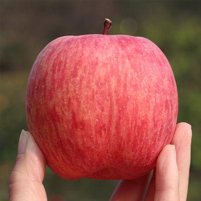 陕西红富士丑苹果带箱10斤新鲜水果当季现摘包邮非精品非冰糖心