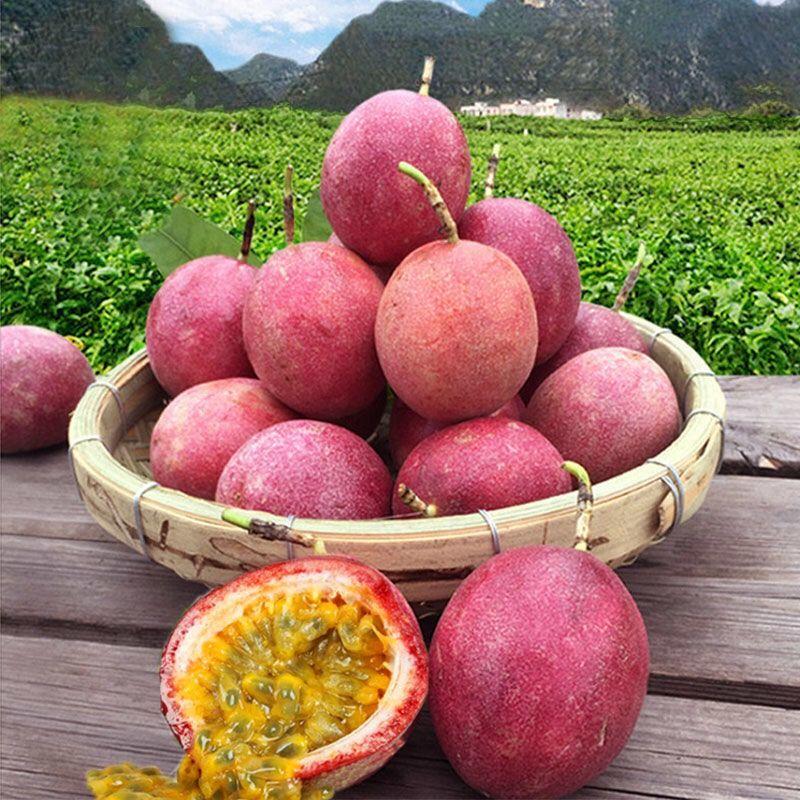 百香果3斤5新鲜热带水果西潘莲鸡蛋果大果现摘现发紫色红色白香果【9月17日发完】_5