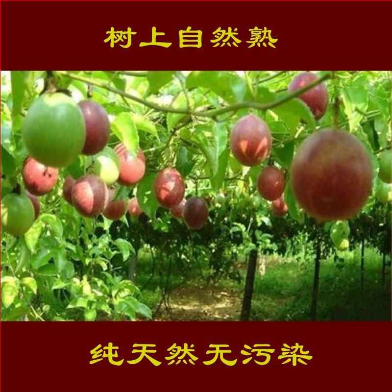 百香果批发新鲜水果新鲜广西百香果5斤非黄金百香果10斤鸡蛋果3斤_7