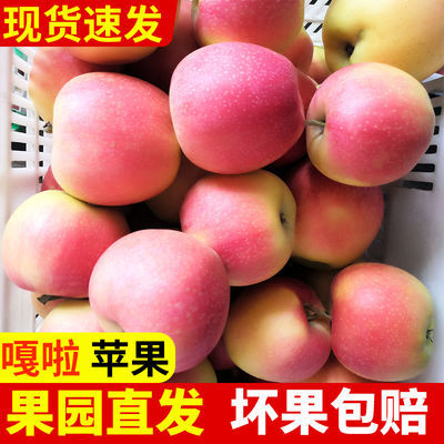 【脆甜现摘】苹果水果应季嘎啦苹果当季新鲜孕妇水果非红富士苹果