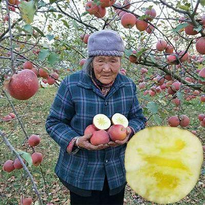 云南昭通苹果水果新鲜红富士冰糖心野生盐源丑苹果当季批发整箱