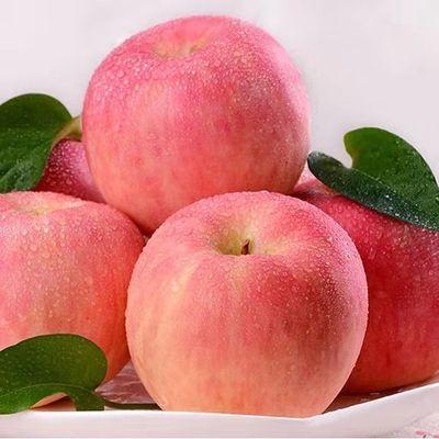 山东烟台栖霞苹果新鲜采摘红富士苹果3/5/10斤多仓发货