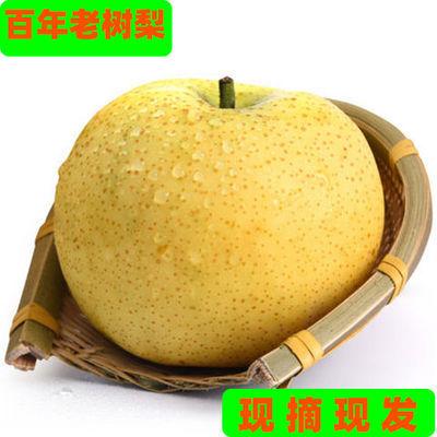 梨子水果 批发香甜酥脆砀山酥梨香梨水果新鲜梨现摘百年皇冠梨