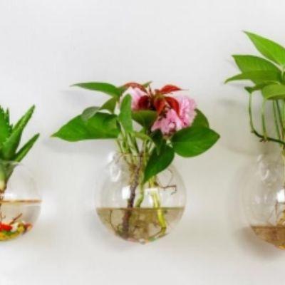 玻璃花瓶绿萝水培植物墙上小清新迷你小号容器悬挂鱼缸盆壁挂透明