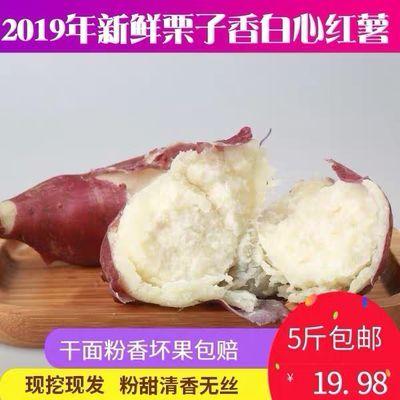 爆皮王番薯3 5斤 新鲜白心红薯大白薯板栗薯红皮白肉山芋白瓤地瓜